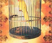 19 - De Gevangene