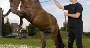 Holistische benadering van het paard