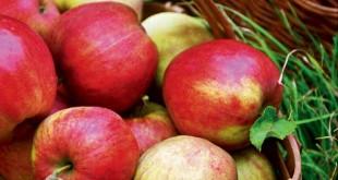 Appeloogst is appelkracht