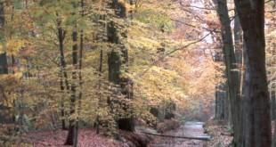 Bomen en hun geneeskrachtige werking