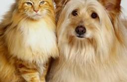 Voeding en voedingsproblemen bij katten en honden