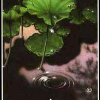 8 - Loslaten (Water)