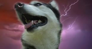 Verlatingsangst bij honden