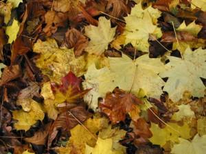 Herfst Ongemakken
