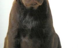 De evolutie van pup tot hond en de invloeden van die ontwikkeling op het later gedrag