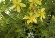 Winterdepressie of voorjaarsblues